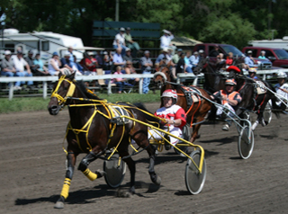 Harness Racing Forum