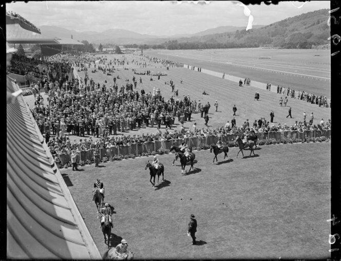Horses in the Wellington Cup in the birdcage at the Trentham Racecourse, photographed circa 23 January 1951.jpg