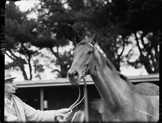 10 July 1950 Racehorse called The Scotsman being displayed possibly by its owner or trainer at Trentham race course..jpg