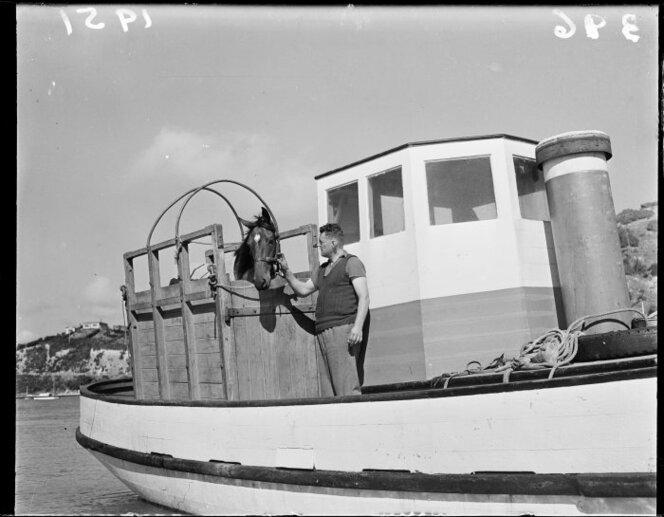 5 April 1951 The racehorse Royal Tan arriving by launch at Paremata for a race at Trentham(1)..jpg