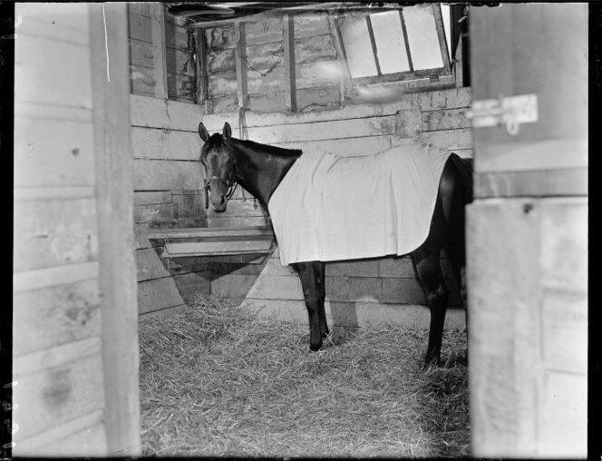 11 Jan 1951 The racehorse Beaumaris in training(9).jpg