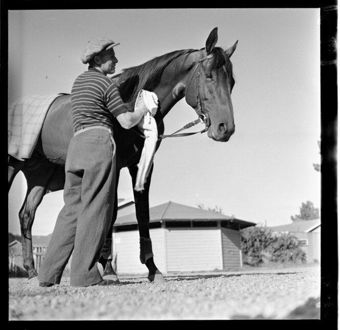 11 Jan 1951 The racehorse Beaumaris in training(5).jpg