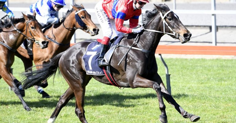 Matamata win justifies big offers