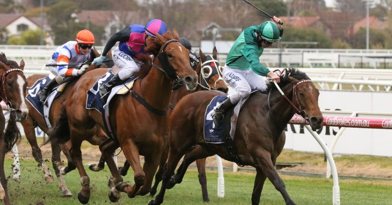 Cox Plate rematch ahead for Humidor