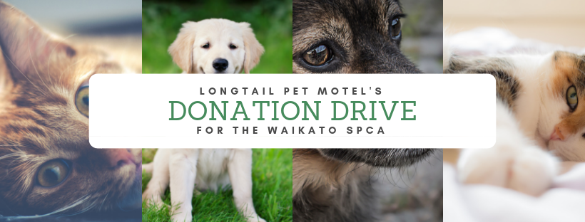 Donate to the Waikato SPCA through Hamilton's leading boarding kennels and cattery, Longtail Pet Motel, donation drive.