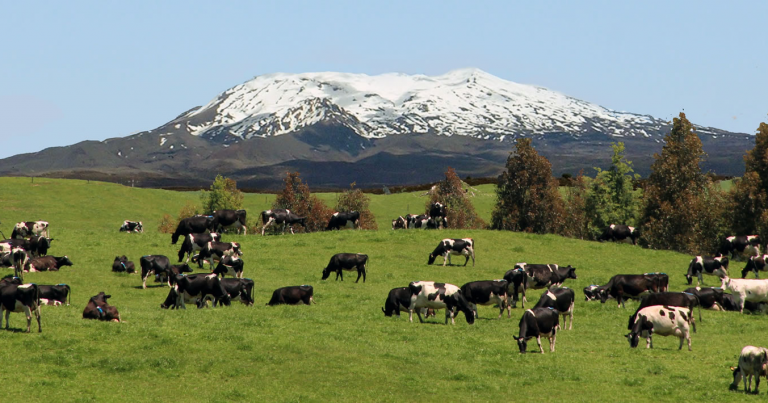 Leading Farming and Soil Nutrition Company Uptake New Zealand Provide A Healthy And Sustainable Answer To Agricultural Environmental Woes