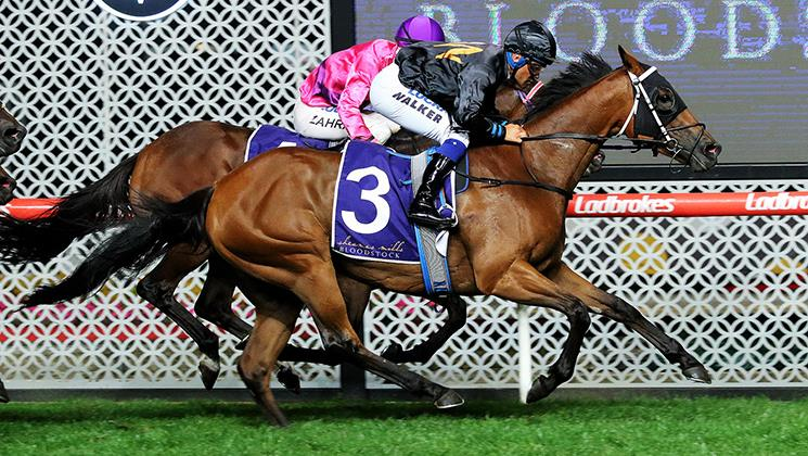 CONSENSUS PRIMED FOR HOLLINDALE STAKES