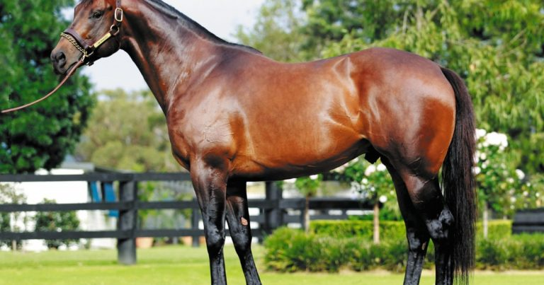 I AM INVINCIBLE STUD FEE $A247,500