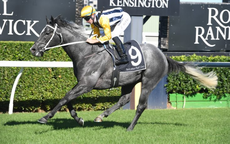 NOBU NOW HEADING TO QUEENSLAND DERBY