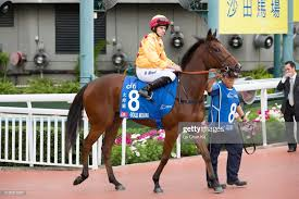 MELBOURNE CUP PLANS FOR GOLD MOUNT