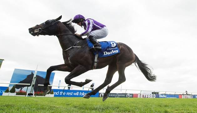 COOLMORE STALLION TO SHUTTLE TO NZ