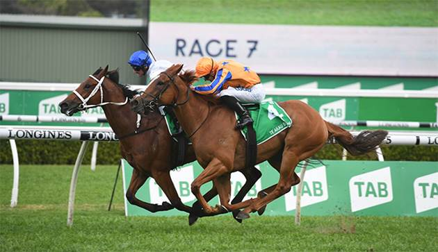 SHARK IN COX PLATE FIELD BUT JUMPS FROM 14