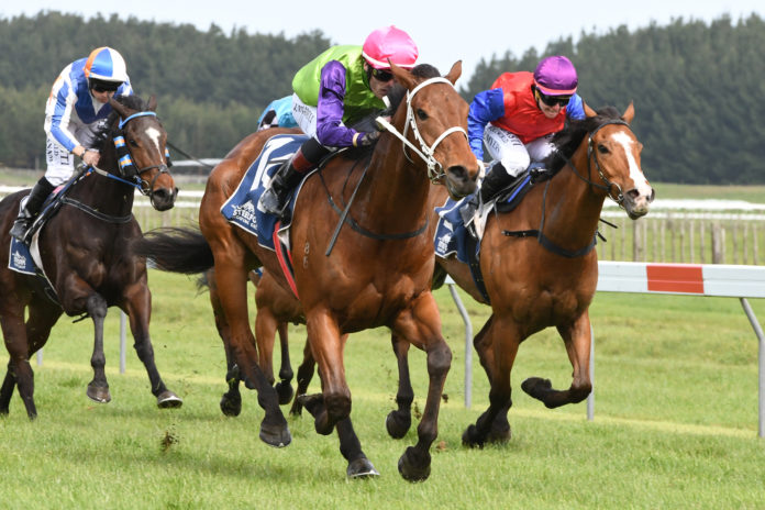 Pimlico on track for bigger things