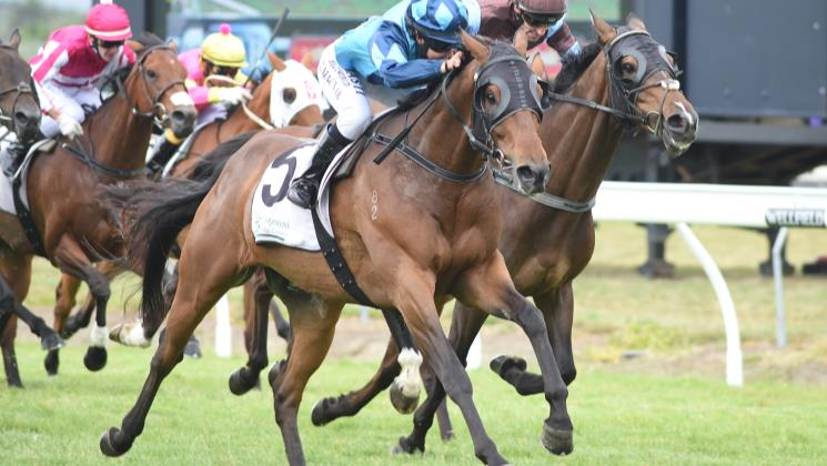 Duplicity in fine fettle ahead of stakes task