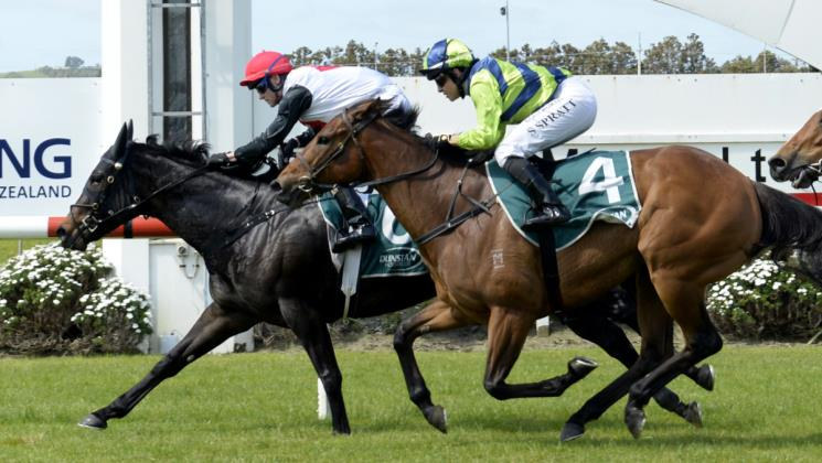 Williams mares fancied at Pukekohe