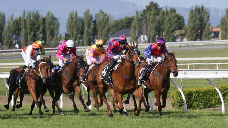 Toms comes of age in Feilding Gold Cup