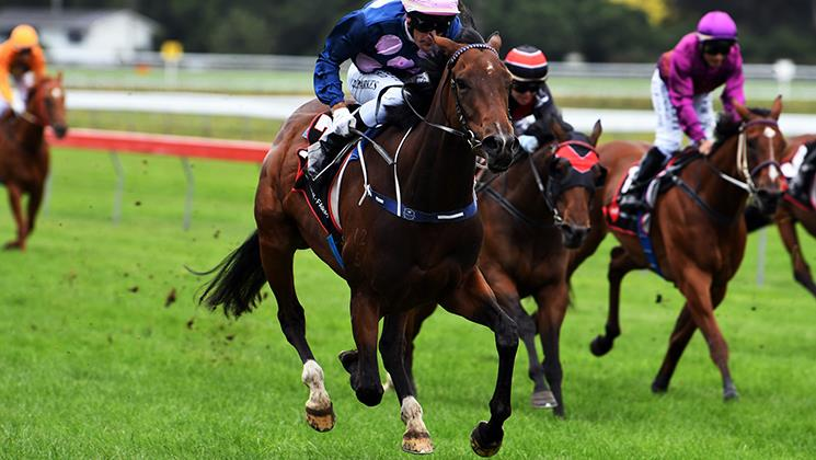 Waverley Cup to launch another Group One bid