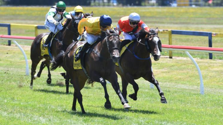 Steep learning curve pays off for Sacred Falls filly