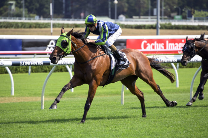Group One performer Luvaluva retired