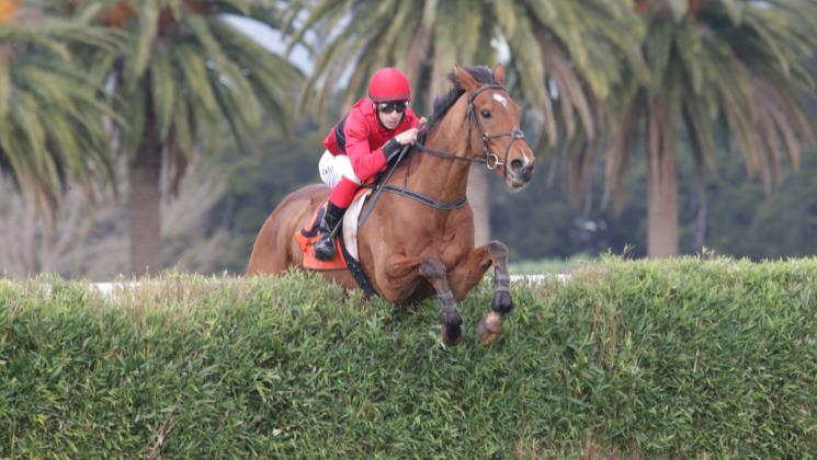 Jumping features instore for Nelson pair